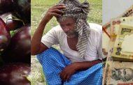 नोटबंदी के कारण बैगन की खेती करने वाले किसानों को हुआ नुकसान.