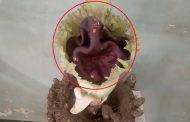 पालघर : सुरन के फूल में प्रकट हुए गणेश भगवान , देखने के लिए उमड़ी भक्तो की भीड़ !