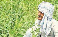 किसानों के लिए खुशखबरी , घर में हो शादी, तो बिना एसएमएस बेच सकेंगे गेहूं