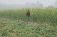 हल्की बरसात से राहत: फसलों को संजीवनी, किसान मुस्कुराये