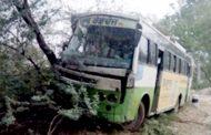 बिजली के खंभे और पेड़ से टकराई अनियंत्रित बस , 22 घायल