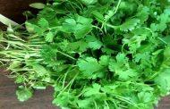 सब्जियों की भरपूर आवक, फिर भी धनिया सौ रुपये किलो