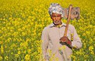 कर्ज माफी से दो भागों में बंटा किसान, सहकारी बैंक हलाकान