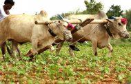 महाराष्ट्र : किसानों के एक लाख रुपये का कर्ज माफ