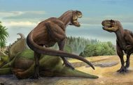 वैज्ञानिकों ने खोजी डायनासोर की नई प्रजाति