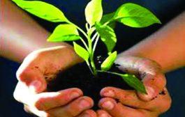 हरेला महोत्सव : आंगनबाड़ी कार्यकत्रियों ने रोपे 11 हजार पौध