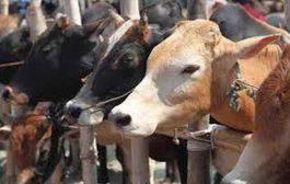 लोकायुक्त ने दिए मालेगांव शहर के अवैध बूचड़खाने-कारखाने हटाने के आदेश