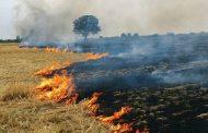 फसलों की कटाई के बाद अवशेष खेत में जलाने पर लगेगा दण्ड