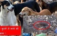 मुंबई :  दो घंटे तक 8 साल के बच्चे को नोचते रहे आवारा कुत्ते , बच्चे की हुई दर्दनाक मौत !