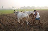 महाराष्ट्र  : पालघर जिल्ह्यात 17908  शेतकऱ्यांना  कर्जमाफी..