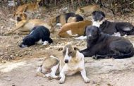 जानवरों में भी बढ़ रही है पथरी की समस्या