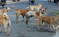 पालघर में कुत्तो का आतंक , कुत्ते के काटने से एक बच्चे की मौत !