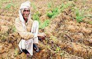 कृषि मंत्री बोले, ''किसानों को नहीं छोड़ेंगे भाग्य-भरोसे''
