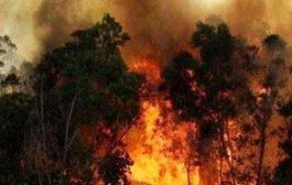 ऑस्ट्रेलिया के जंगल में लगी भीषण आग , 70 घर जलकर ख़ाक