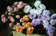 इस तरह सुखाइए गुलदस्ते के फूल, फिर बनाइए गुलदस्ते, कार्ड या बुके