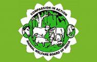 चींटी से लेकर हाथी तक तक सभी की सुरक्षा: पशु कल्याण बोर्ड