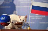 FIFA WORLD CUP : इस बिल्ले की पहली भविष्यवाणी सही , रूस ने सऊदी अरब को हराया