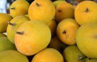 इस फल में होते हैं कई गुण , गर्भवती महिला के लिए है वरदान