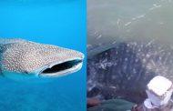 पालघर : जाल में फसी व्हेल मछली की मछुवारों ने इस तरह बचाई जान , देखे video
