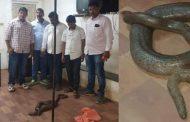 पालघर जिला : करोड़ो रुपये के सांप के साथ स्थानिक नेता गिरफ्तार,शिवसेना के टिकट पर लड़ चूका है बिधायाकी का चुनाव