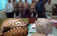 भाईंदर में 22 लाख किंमत का 'पैंगोलिन' की खाल जब्त , तीन लोगों को पुलिस ने किया गिरफ्तार