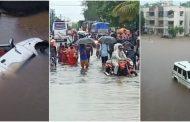 मुसलाधार बारिश से पालघर जिले में जन जीवन हुवा अस्त व्यस्त, सड़के और वेस्टर्न रेलवे हुई ठप्प