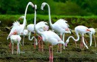 मराठी : मनमोहक फ्लेमिंगो पक्ष्यांचं पालघर जिल्ह्यातल्या जलाशयात आगमन