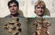 तेंदूआ की खाल और नाखून के साथ 2 तस्कर गिरफ्तार,क्राइम ब्रांच की कार्रवाई
