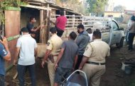 पालघर - गाय का क़त्ल करने वाले 6 लोगो को पुलिस ने किया गिरफ्तार