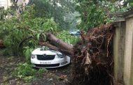 मुंबई में गिरे पेडों के लिए बीजेपी नें बीएमसी को ठराया जिम्मेदार, बीजेपी दर्ज करायेगी वृक्ष वध का मुकदमा
