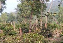 Photo of विकास  के लिए 1343 वृक्षों पर कुल्हाड़ी , प्राधिकरण की बैठक में होगा तय